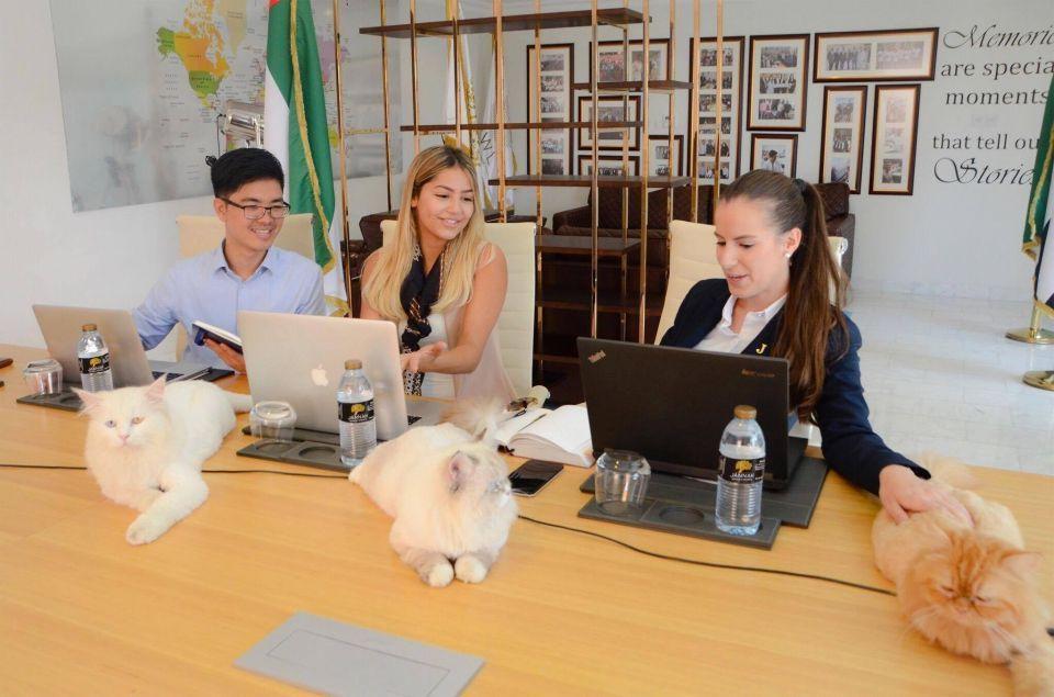 8 قطط تنضم لفريق عمل فنادق ومنتجعات جنة في أبوظبي