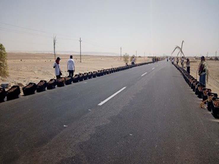 """مصر تسعى لدخول """"غينيس″ بسلسلة تمور طولها 5 كيلومترات"""