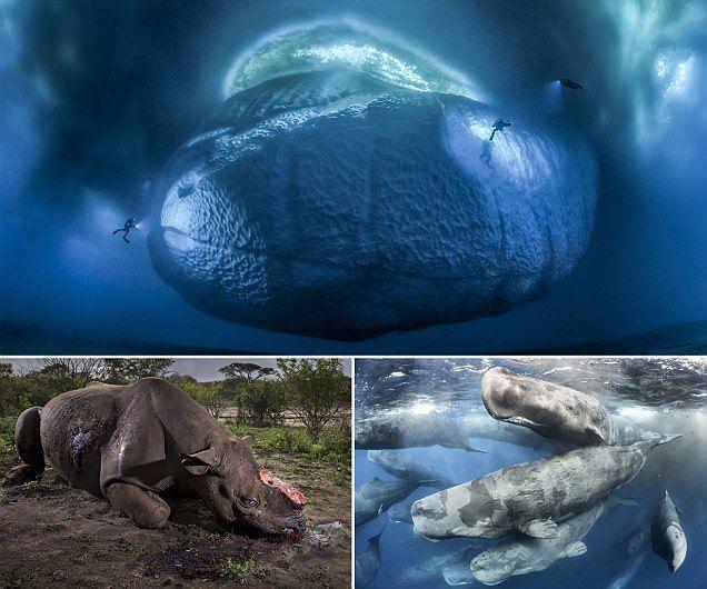 10 صور تفوز بجائزة الحياة البرية من أصل 50 ألف صورة من 92 بلدا