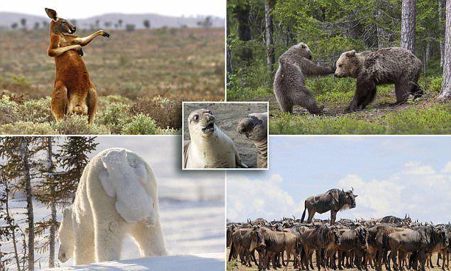 مسابقة لقطات كوميدية للحياة البرية
