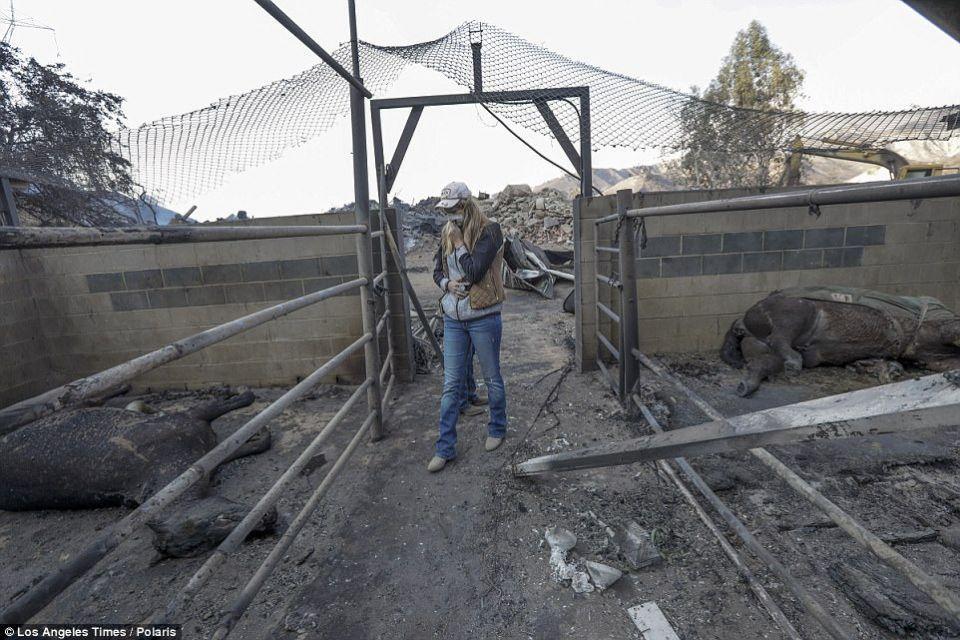 حرائق كاليفورنيا تأتي على منازل أثرياء منهم مردوخ وبيونسية و عشرات الأحصنة