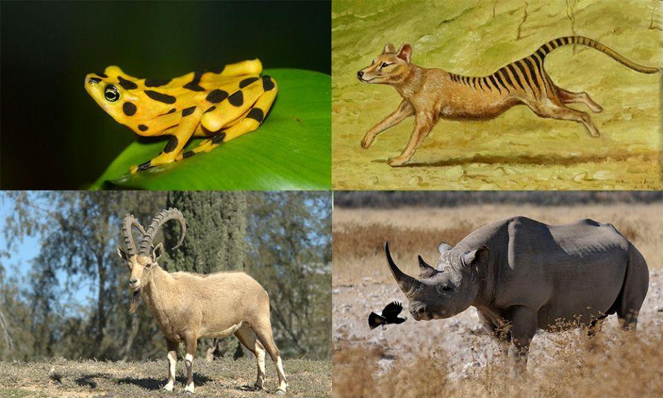 اسماء الحيوانات المنقرضة حديثا في العالم أريبيان بزنس