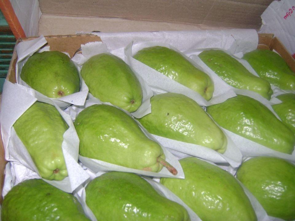 السعودية تحظر استيراد الجوافة المصرية المجمدة