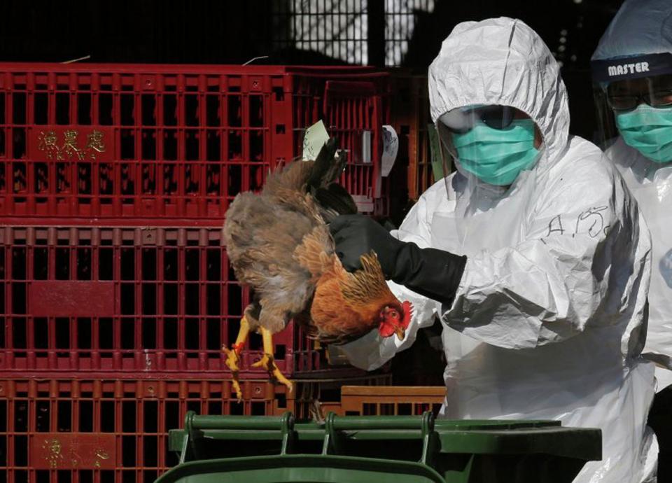 اكتشاف بؤرة لإنفلونزا الطيور في منطقة الرياض