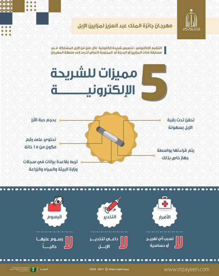 السعودية تلزم  ملاك الإبل بوضع شريحة إلكترونية
