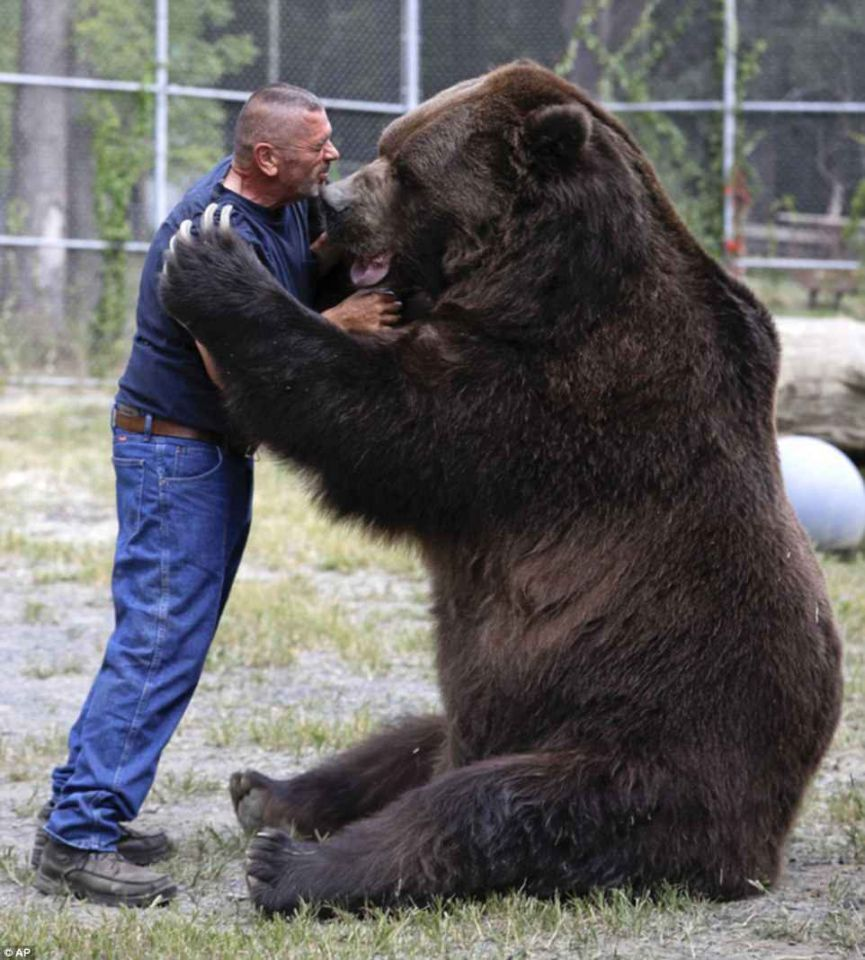 أكبر حيوانات العالم