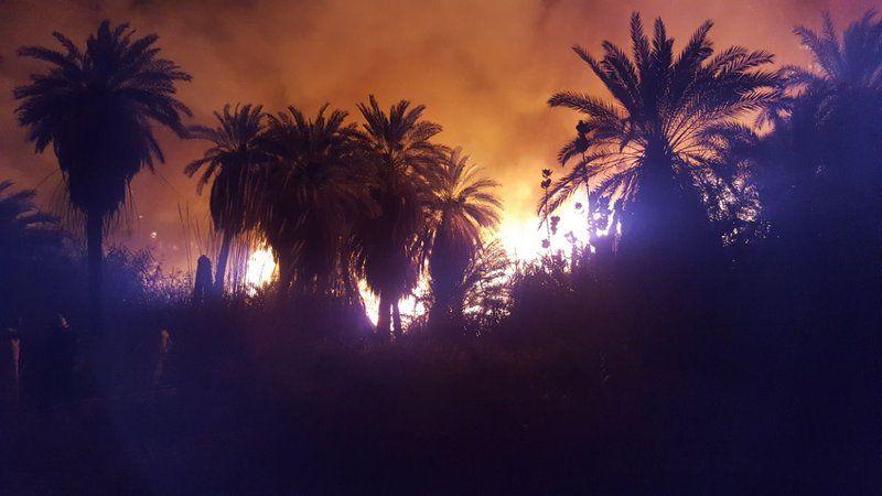 السعودية: حريق هائل التهم مزرعة نخيل في تبوك على مدى 8 ساعات...صور