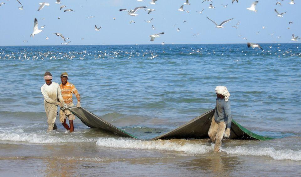 التحذير من انقراض الأسماك في الخليج العربي