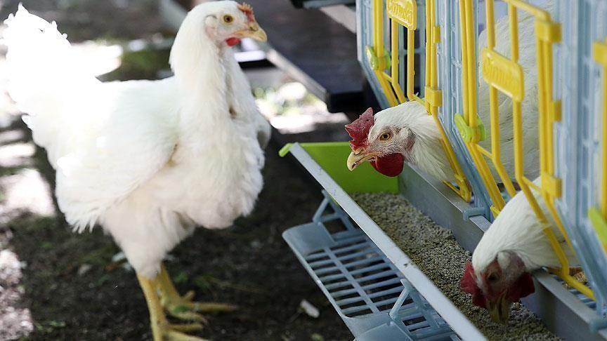الإمارات تحظر استيراد الطيور الحية من روسيا