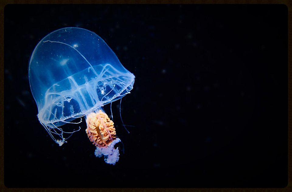بالصور: فنانة في الإمارات تلتقط مشاهد مثيرة تحت البحر