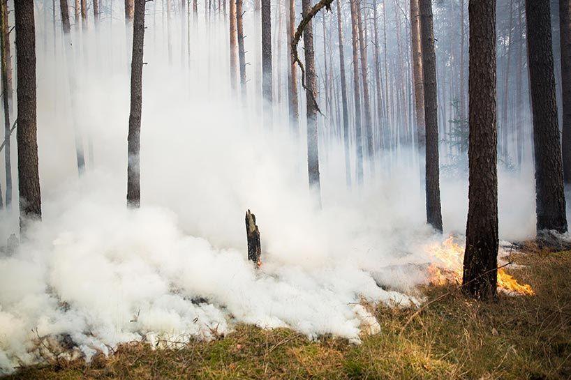 بالصور: الحرائق تلتهم مساحات شاسعة من الغابات في ألمانيا