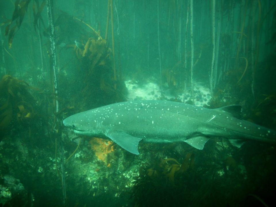 بالصور: 9 أماكن يمكنك التوجه إليها للغطس مع أسماك القرش