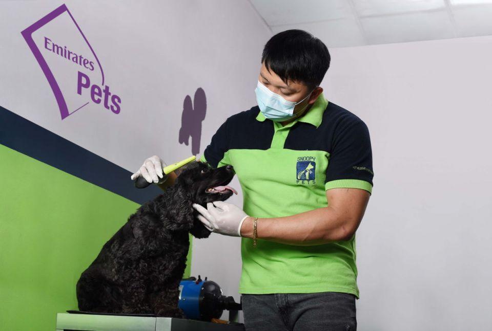 الإمارات للشحن الجوي تطلق خدمة نقل الحيوانات الأليفة