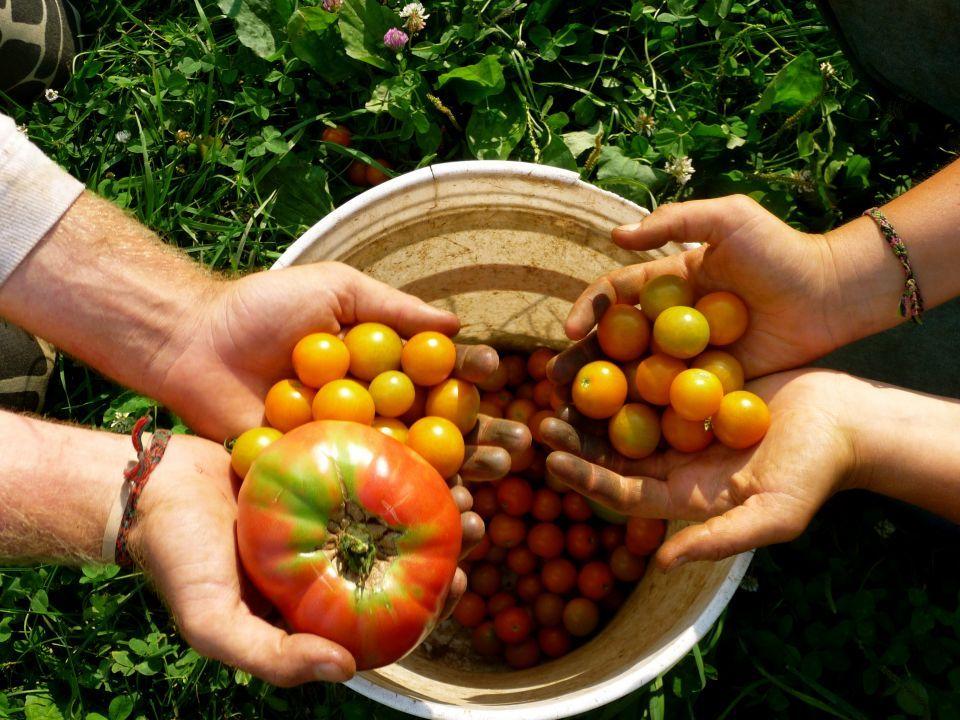 دراسة: فائدة زيادة تناول الخضار والفاكهة تعادل العثور على وظيفة