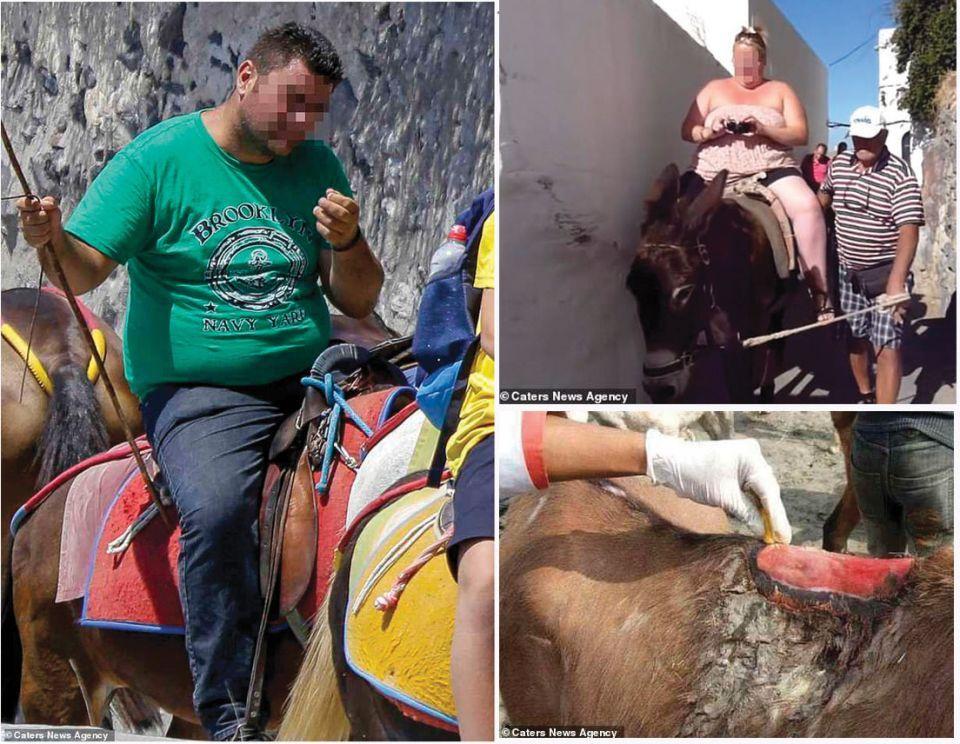منع  السياح البدناء من ركوب الحمير في اليونان