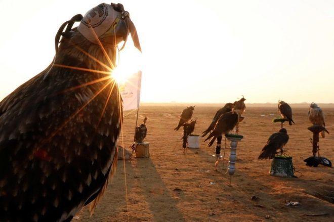 بالصور : اليوم العالمي للصقارة في مصر