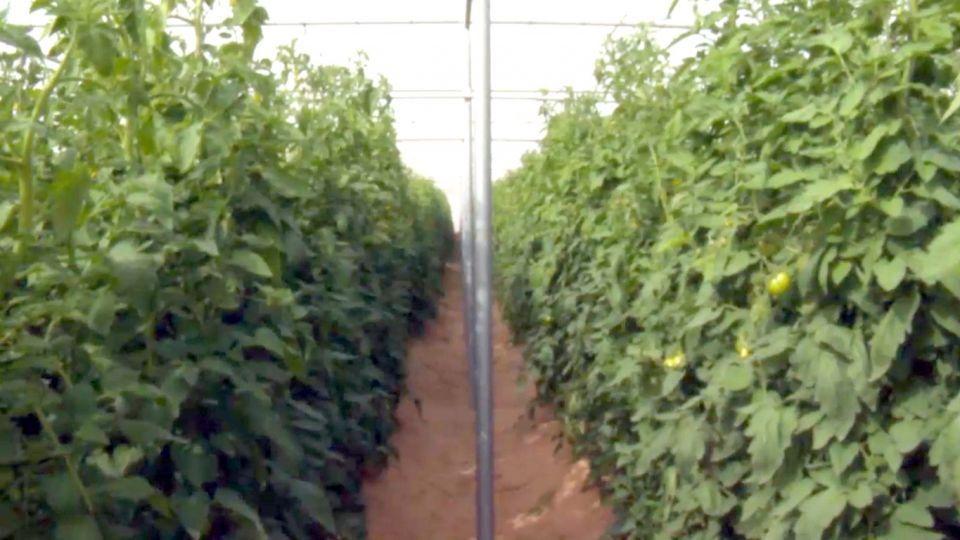 نهضة زراعية كبيرة في الإمارات بعد تأسيس «مركز خدمات أبوظبي»