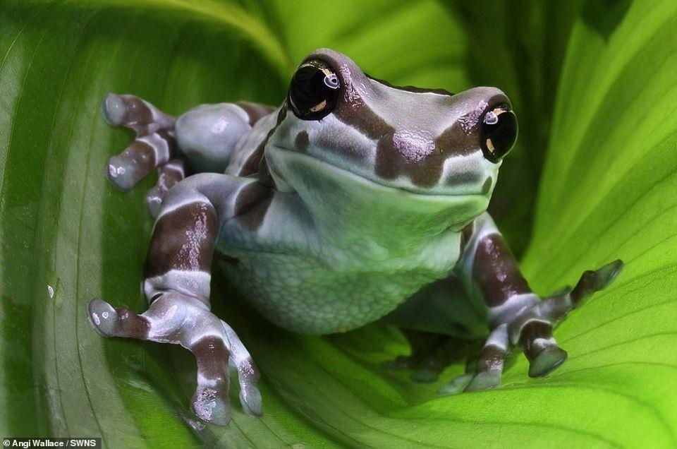أفضل مشاركات مسابقة صور الحياة البرية