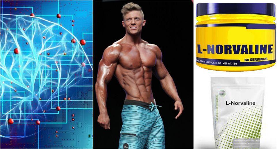 بروتينات بناء العضلات لتمارين كمال الأجسام تسبب تلف الدماغ