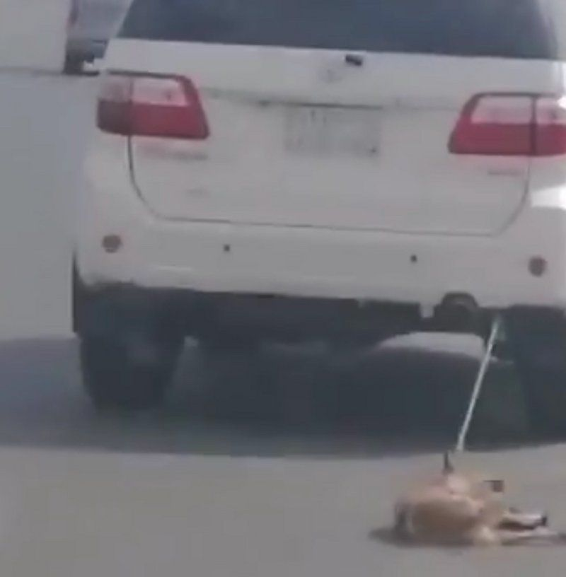 بالفيديو.. سعودي يعذب كلباً بجره بسيارته وغضب يجتاح مواقع التواصل