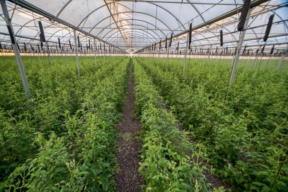 حوافز بقيمة مليار درهم لاستقطاب شركات التكنولوجيا الزراعية إلى أبوظبي
