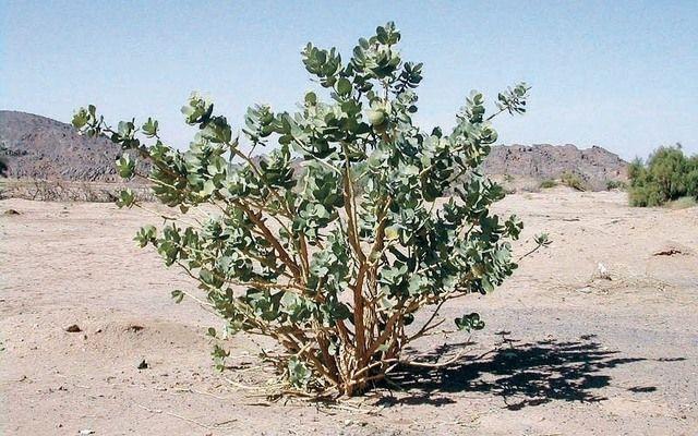 «صحة أبوظبي» تحذّر من نباتات سامة تسبب العمى أو تؤدي إلى الوفاة