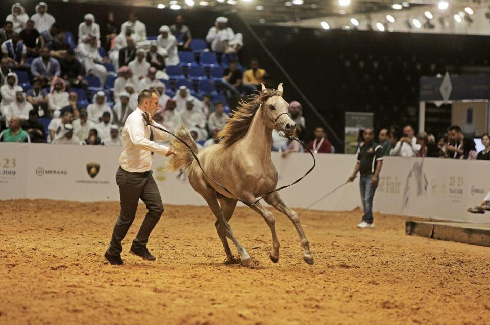 4.25 ملايين درهم حصيلة بيع 90 حصانا في مزاد لؤلؤة دبي
