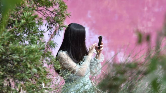 شاهد: بحيرة وردية اللون في أستراليا