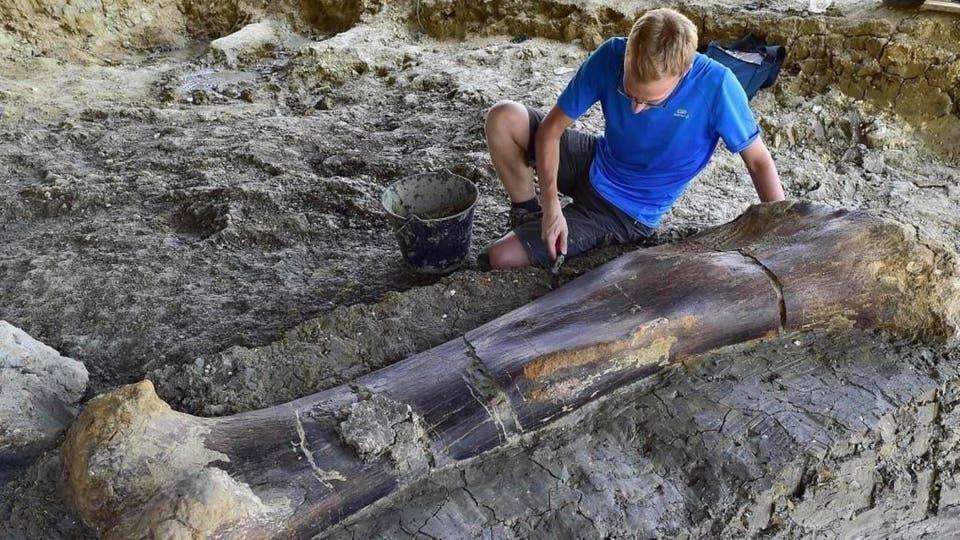 بالفيديو.. اكتشافُ عظم فخذ أضخم ديناصور عاش على ظهر الأرض