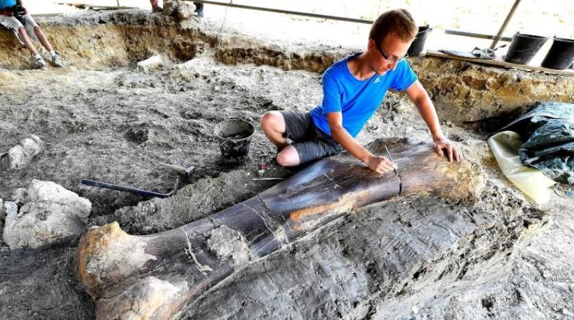 بالصور: اكتشاف عظمة ديناصور عملاق عاش قبل 140 مليون عام