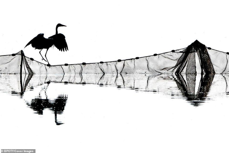 الصور الفائزة في مسابقة مصور الطيور لعام 2019