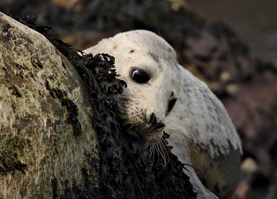 شاهد أروع 12 صورة للحياة البرية في بريطانيا