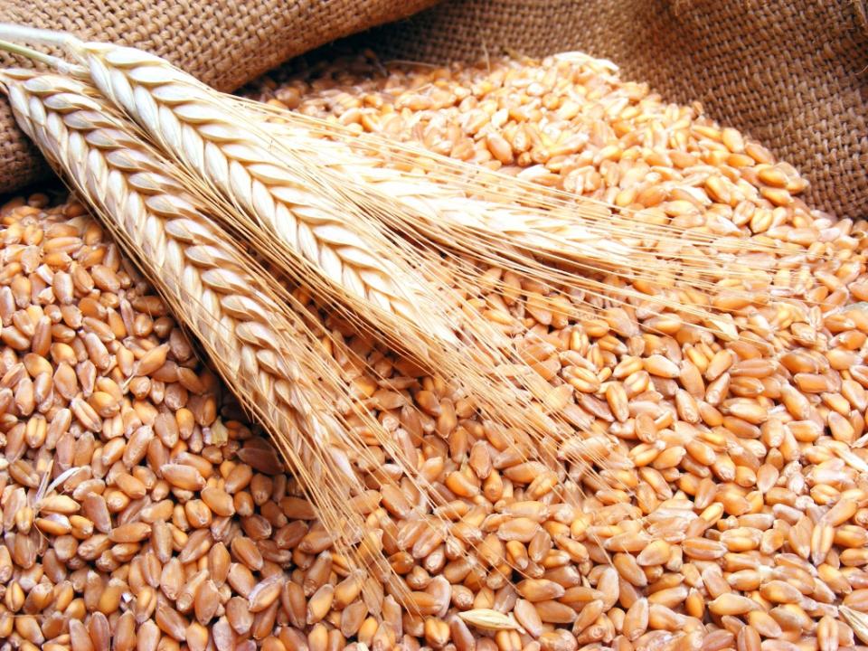 السعودية تسعى لشراء 595 ألف طن من القمح