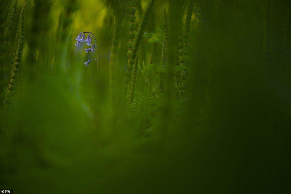 شاهد الصورة الفائزة بمسابقة أفضل صورة للحياة البرية
