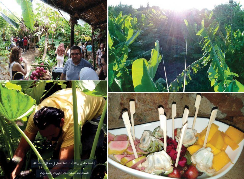 شاهد انتشار زراعة الفاكهة الاستوائية في سوريا