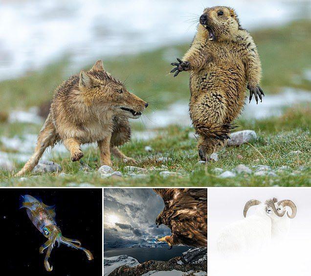 شاهد الصور الفائزة بجائزة تصوير الحياة البرية