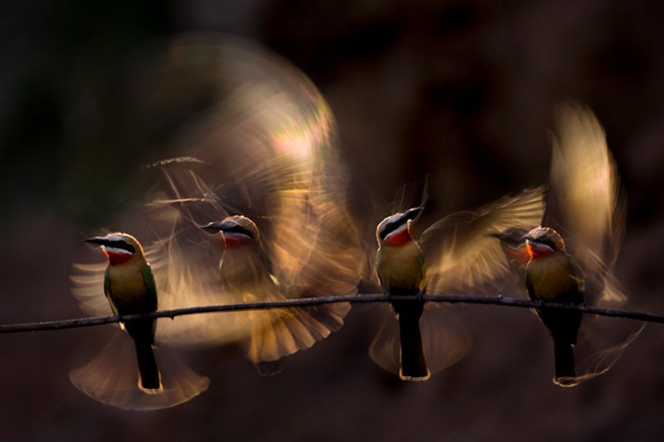 الصور الفائزة في مسابقة مصور الطبيعة لعام 2019