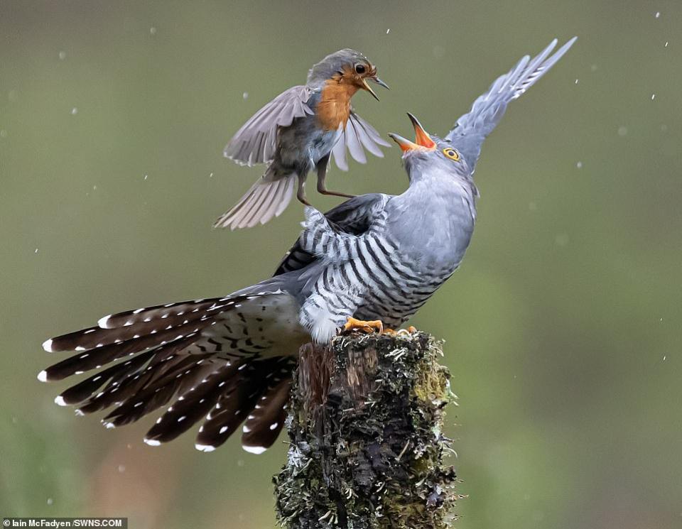 شاهد الصورة الفائزة في مسابقة تصوير الحياة البرية