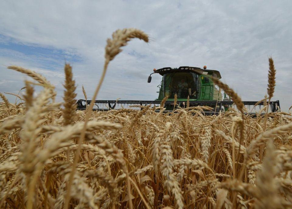 مصر تزرع 2.75 مليون فدان قمحا منذ منتصف نوفمبر