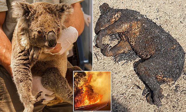 نفوق قرابة 500 مليون حيوان في حرائق استراليا