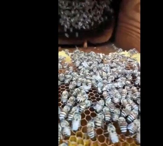 فيديو: البرد القارس يتسبب بموت النحل داخل مناحله في منطقة سعودية