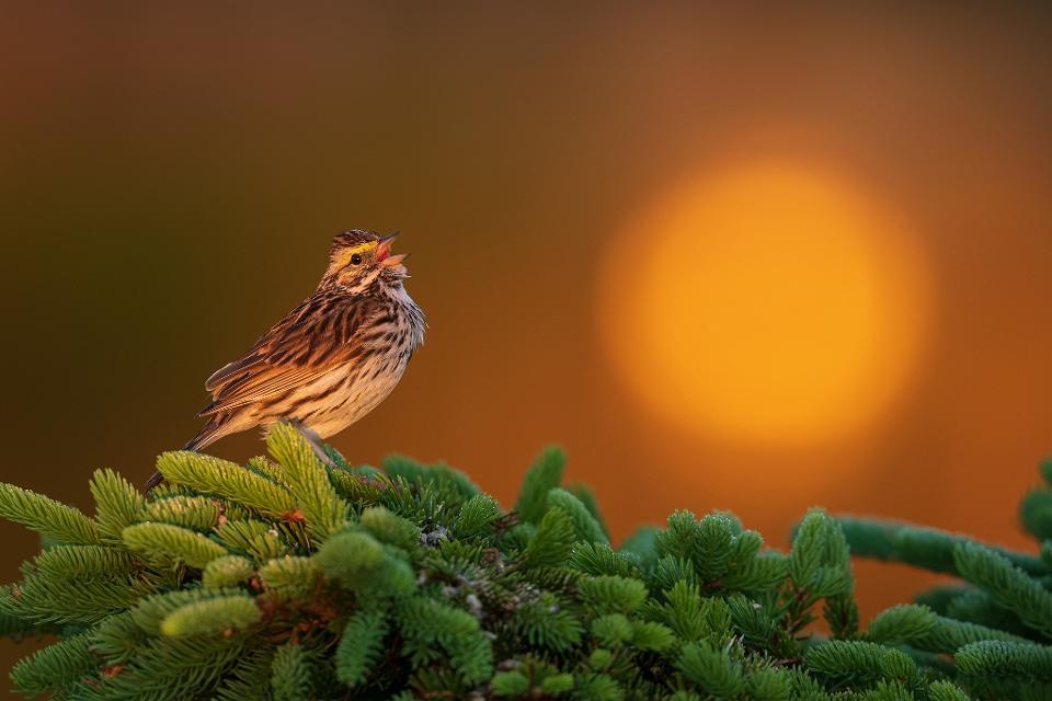 الصور مذهلة تتنافس على جائزة أفضل مصوّر الطيور 2020