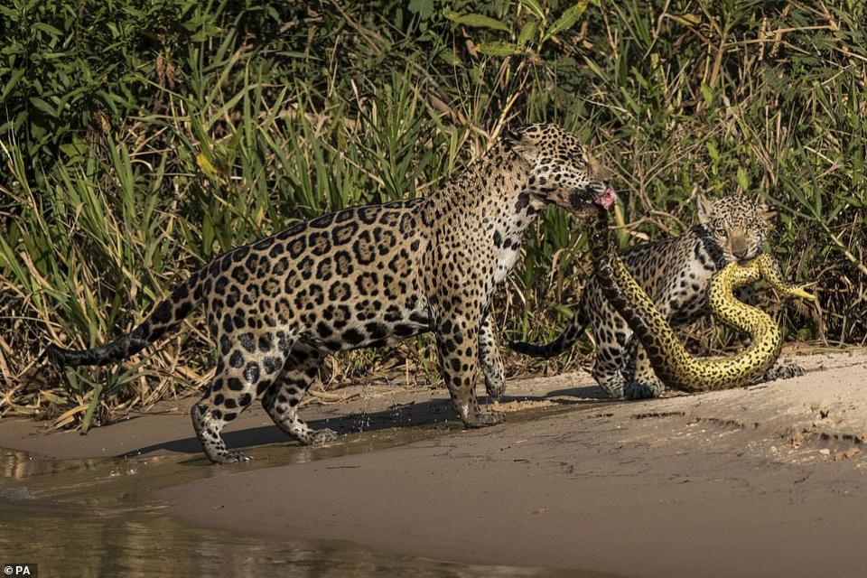 شاهد اللقطة الفائزة بمسابقة صور الحياة البرية