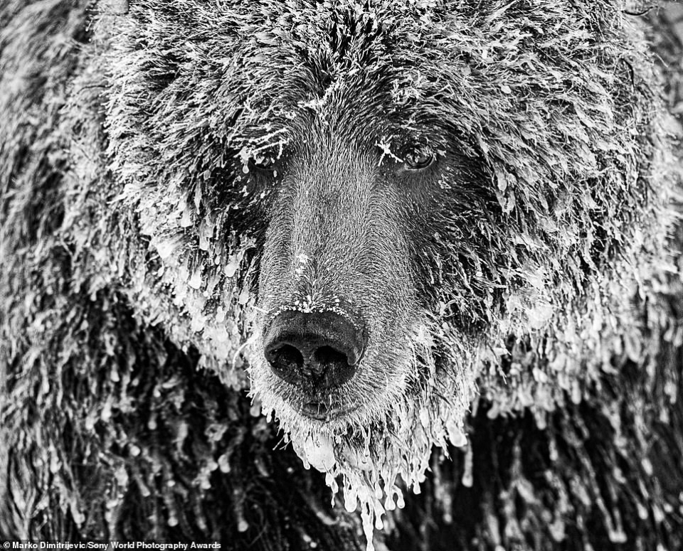 الصور الاحترافية المذهلة في جوائز سوني للتصوير الفوتوغرافي لعام 2020