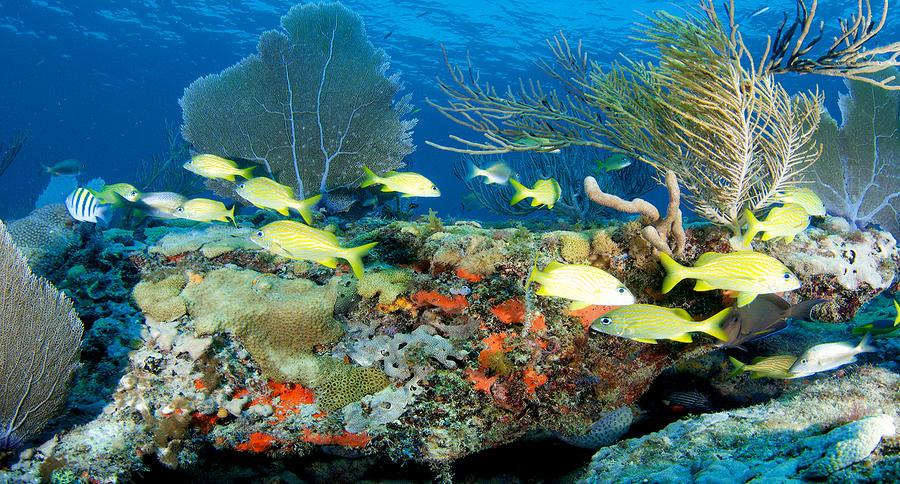 3.5 مليون دولار  من الإمارات لإعادة تأهيل الشعاب المرجانية في ولاية فلوريدا