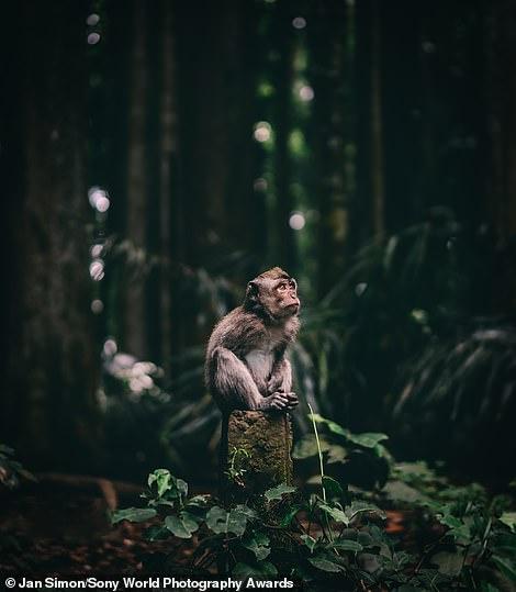 شاهد الصور المذهلة الفائزة بجوائز التصوير العالمية لعام 2020 من سوني