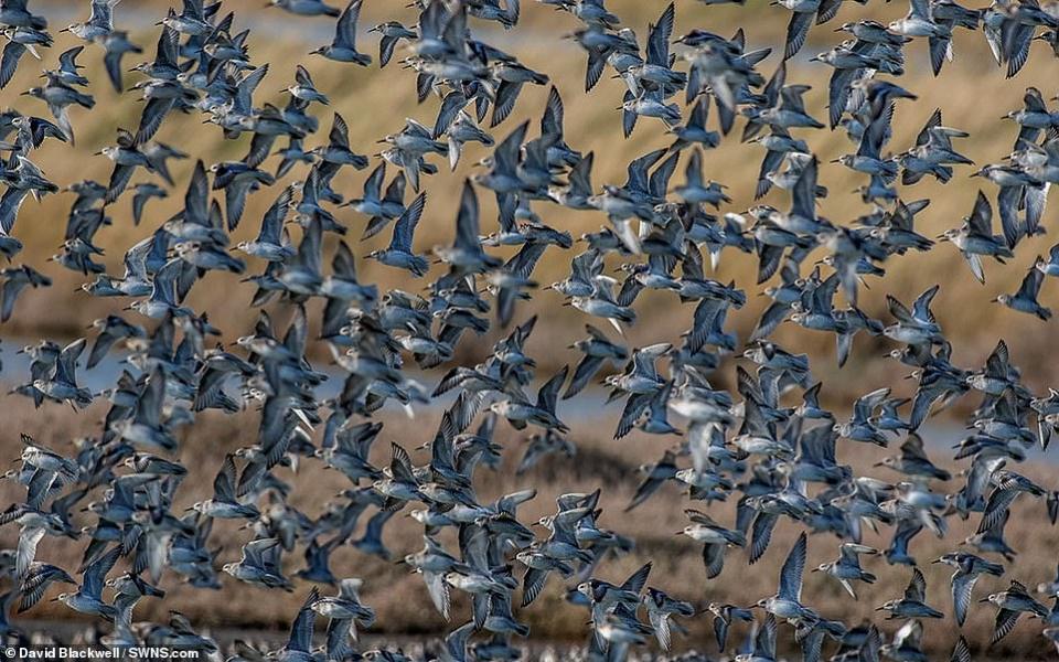 صورة قريبة ليعسوب تفوز بمسابقة صور الحياة البرية السنوية