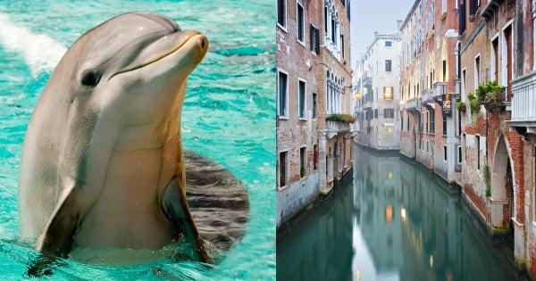 شاهد الدلافين والأسماك تظهر في أقنية البندقية مع المياه الصافية بسبب الحجر الصحي
