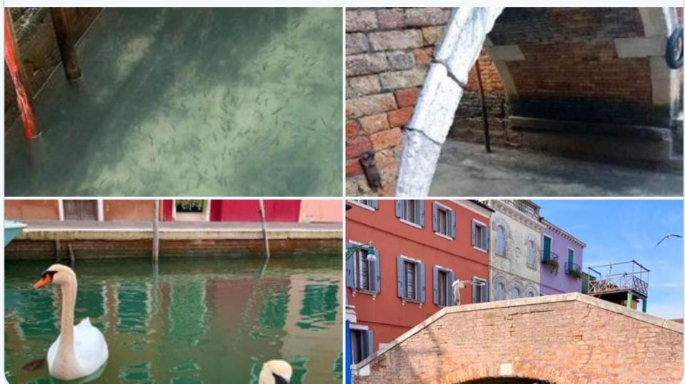 اكتشاف تزوير في صور عن عودة الدلافين والأسماك إلى مياه البندقية الإيطالية