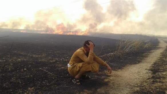 مزارعو قمح الحسكة وحرق المحاصيل في سوريا
